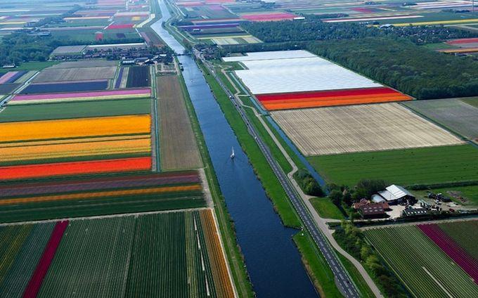поля тюльпанов фото 1 (680x424, 70Kb)