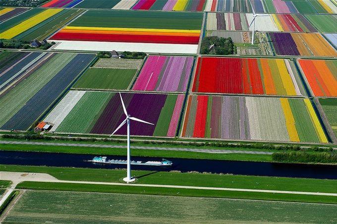 поля тюльпанов фото 3 (680x452, 91Kb)