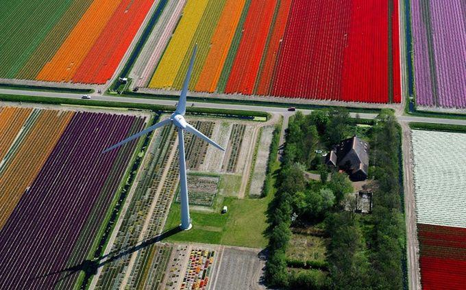 поля тюльпанов фото 4 (680x424, 90Kb)