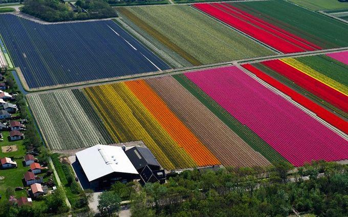 поля тюльпанов фото 6 (680x424, 83Kb)