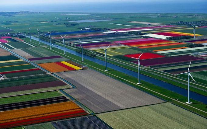 поля тюльпанов фото 8 (680x424, 66Kb)