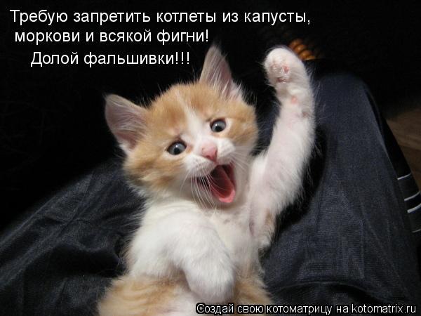 kotomatritsa_D (600x450, 39Kb)