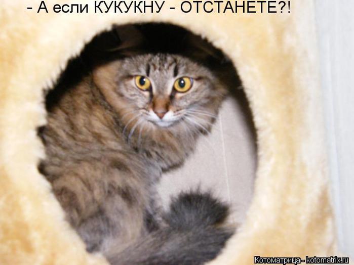 kotomatritsa_kA (700x524, 38Kb)