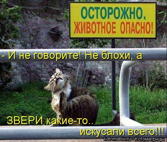 kotomatritsa_Kv (571x485, 70Kb)