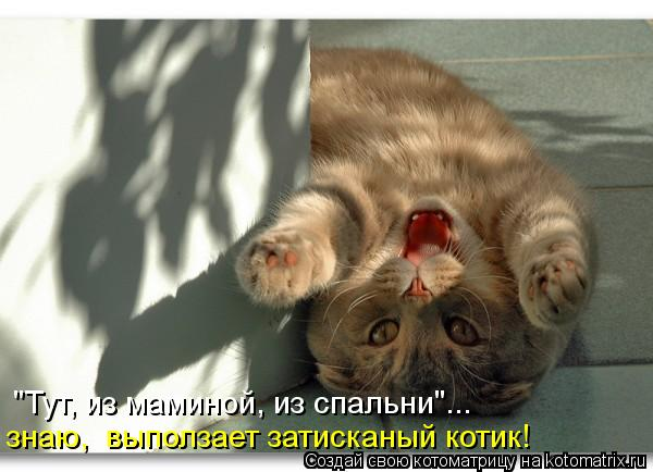 kotomatritsa_tq (600x434, 40Kb)