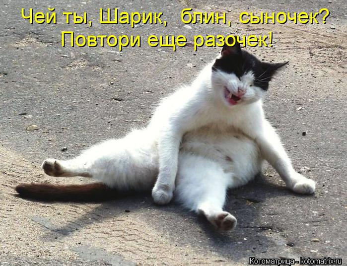 kotomatritsa_wE (700x536, 94Kb)