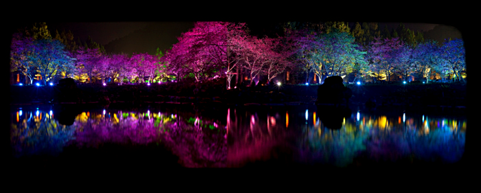 4121583_Cherry_Blossom_festival_3 (700x281, 208Kb)