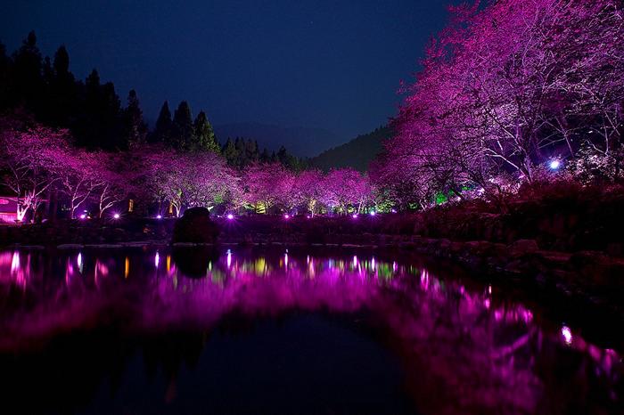 4121583_Cherry_Blossom_festival_5 (700x466, 243Kb)