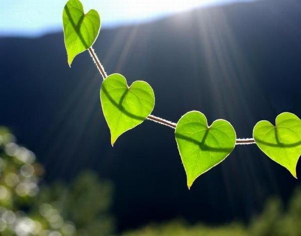 Красивые сердечки (29 фото)/4406465_3 (600x471, 48Kb)