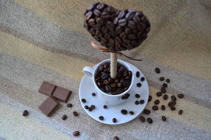 кофейное деревце сердце (18) (700x466, 77Kb)