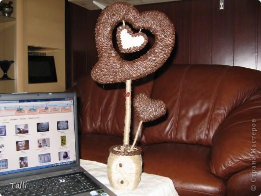 кофейное деревце сердце (19) (520x390, 58Kb)