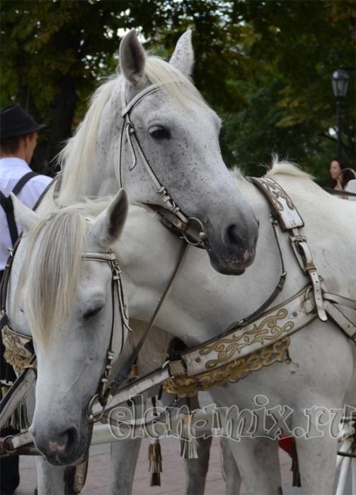 нежность у лошадей
