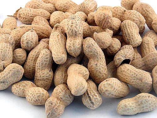 peanut_500 (500x375, 49Kb)