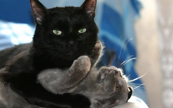 funny_animals_cm_20120217_00342_006 (700x437, 70Kb)