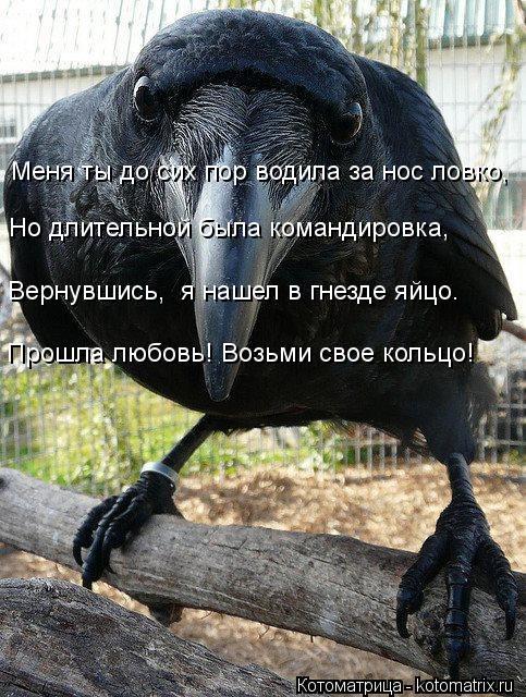 kotomatritsa_2d (483x640, 98Kb)