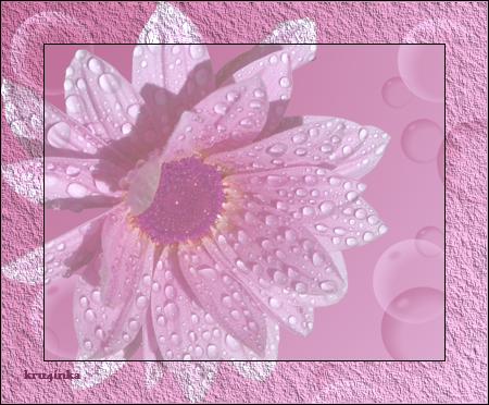 Нежный-цветок-в-росе (450x372, 339Kb)