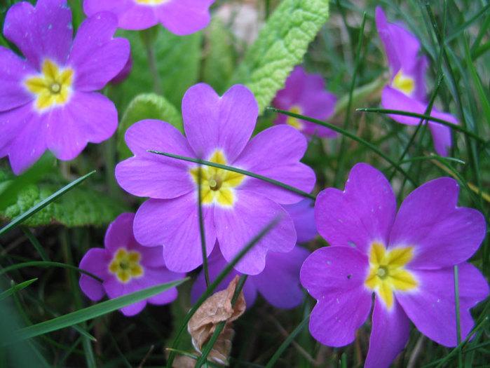 Название цветка по фото 9