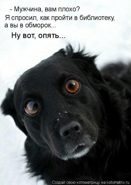 Какая у вас кpасивая собака!