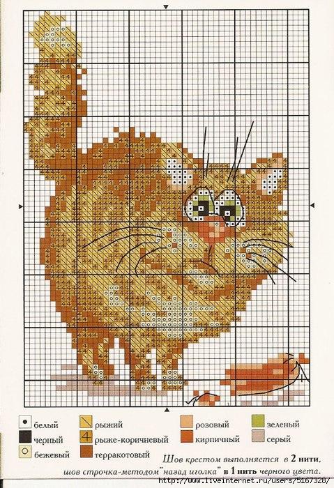 Коты и котики.