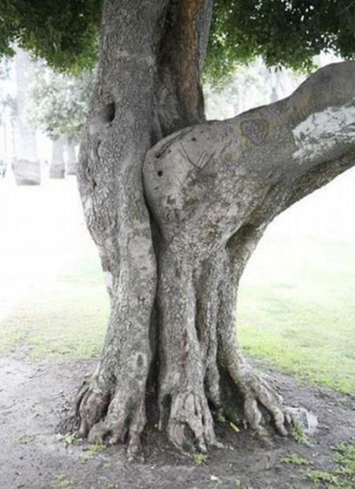 Порнография среди деревьев (12 фото) .