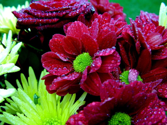 Nature_Flowers_Wet_bouquet_028832_ (700x525, 157Kb)