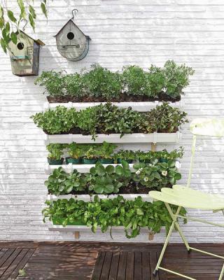 diy-vertical-garden1.thumbnail (320x400, 33Kb)