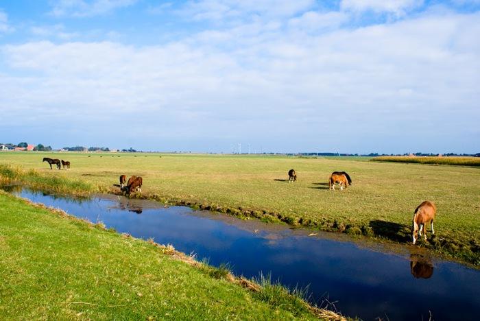 Фрисландия - часть 2. 29371