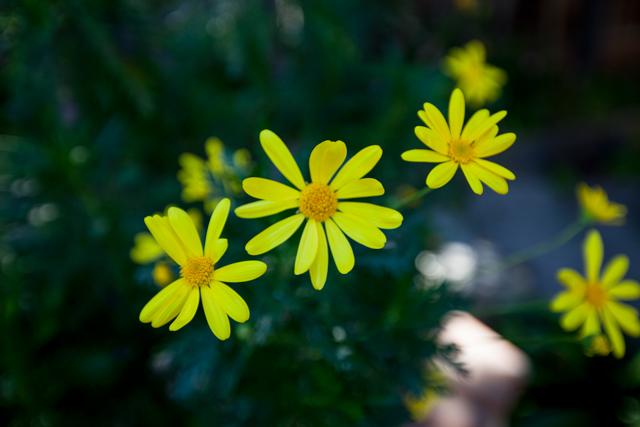 цветы1 (640x427, 198Kb)