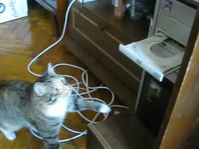 DVD/3518263_cat_vs_dvd1 (400x300, 14Kb)