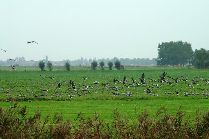 Фрисландия - часть 2. 29910
