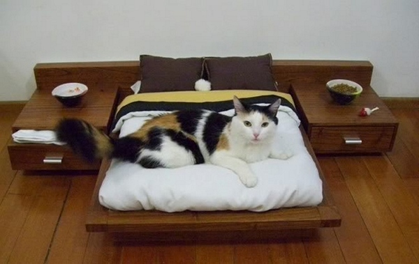 cat-in-the-bed-2 (600x379, 88Kb)