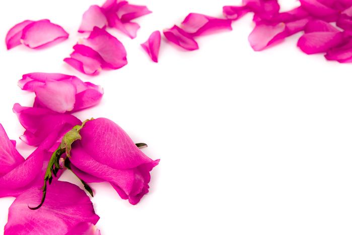 Надписи на цветах. Фотографии на цветах. Эксклюзивные