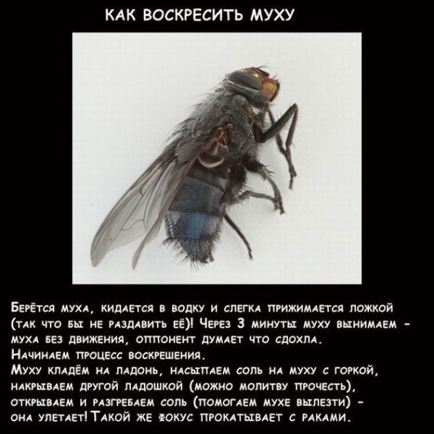 prikoly_na_spor_7 (627x627, 62Kb)