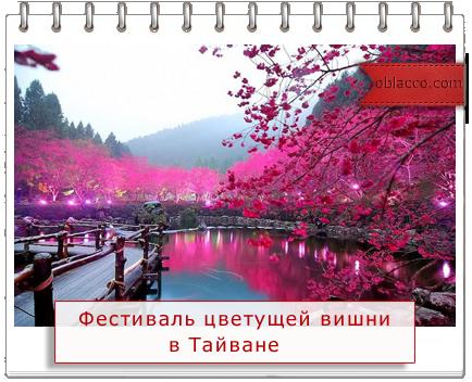 Фестиваль цветущей вишни в Тайване/3518263_vishnya (434x352, 259Kb)