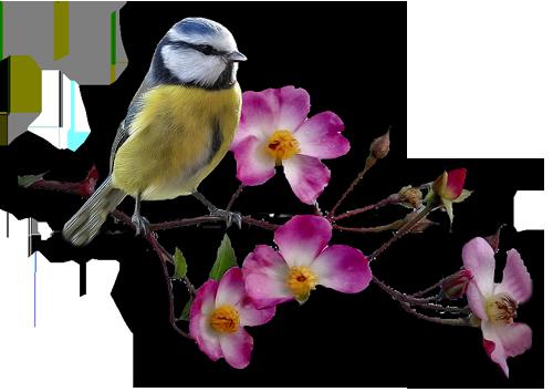 Картинки по запросу цветочек