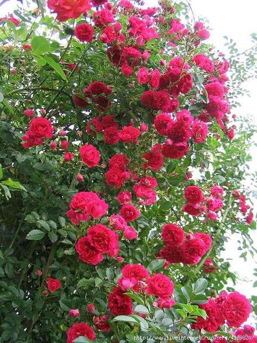 Магазин садовых растений эко сад