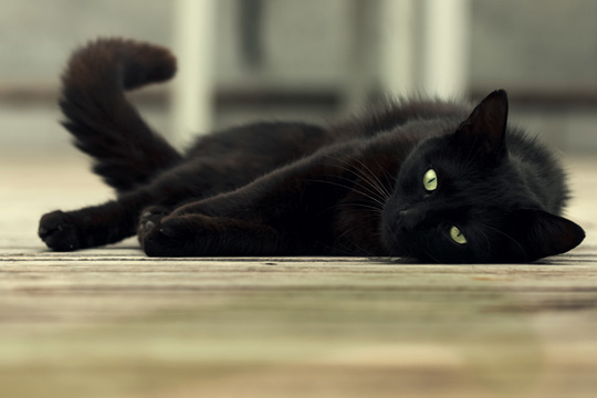 И действительно, кошка – это