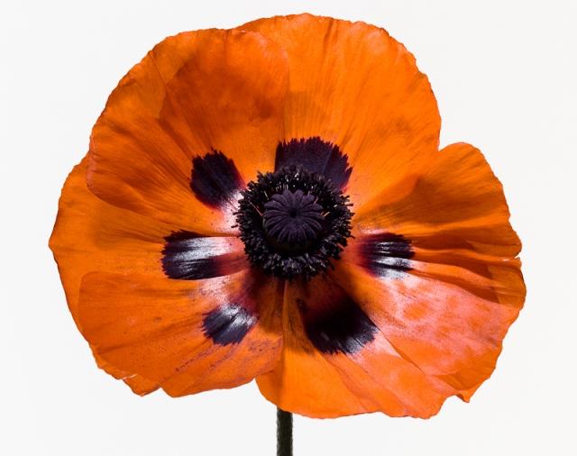 Пол Ланге цветы фото (640x506, 208Kb)