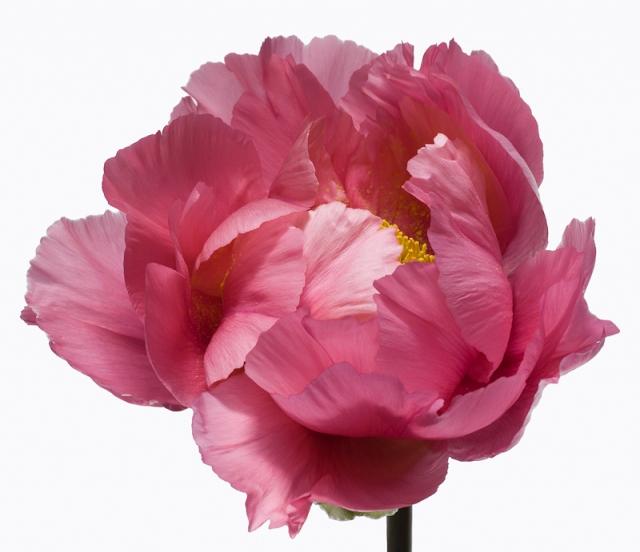 Пол Ланге цветы фото 2 (640x552, 193Kb)