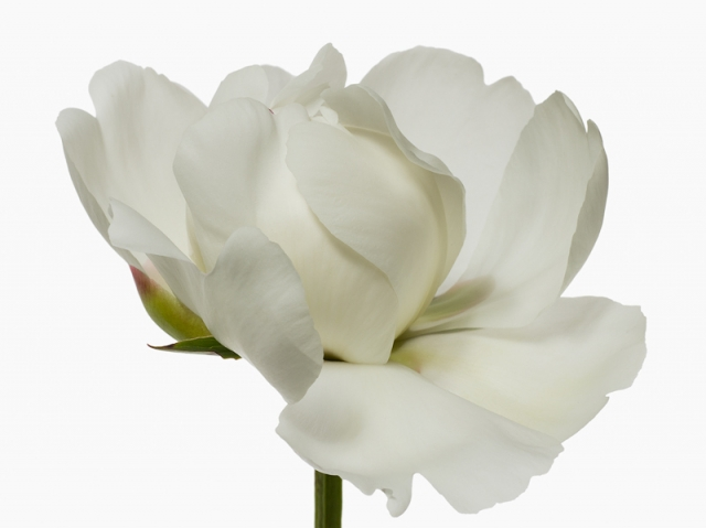 Пол Ланге цветы фото 6 (640x479, 109Kb)