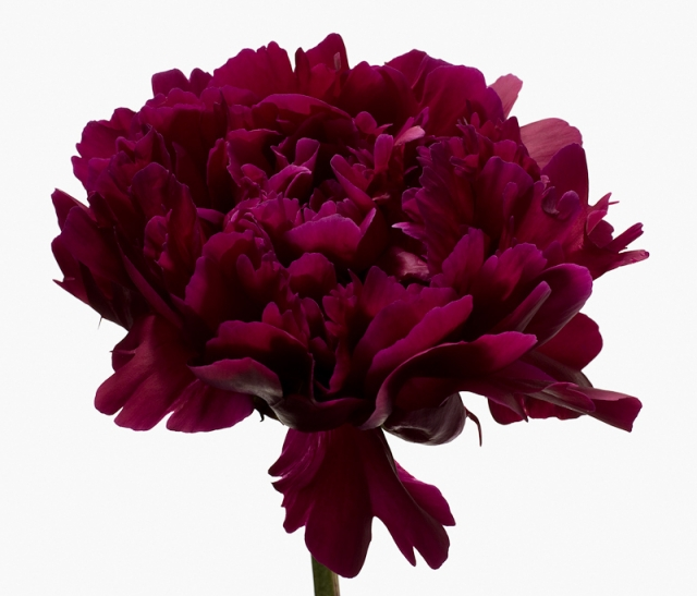 Пол Ланге цветы фото 8 (640x547, 178Kb)