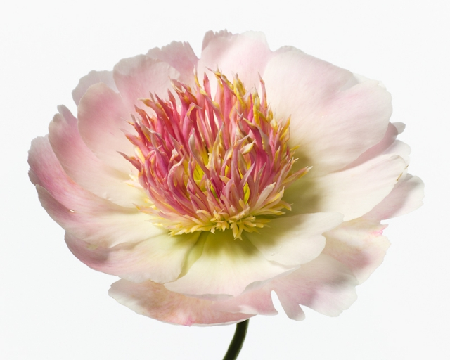 Пол Ланге цветы фото 12 (640x512, 161Kb)
