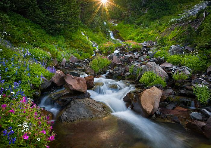 Paradise-Gardens (700x492, 503Kb)