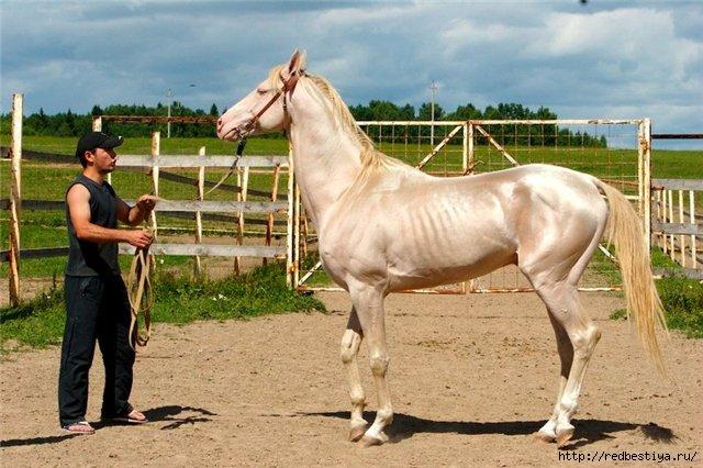 маршруты общественного сколько времени занимает работа с одной лошадью также