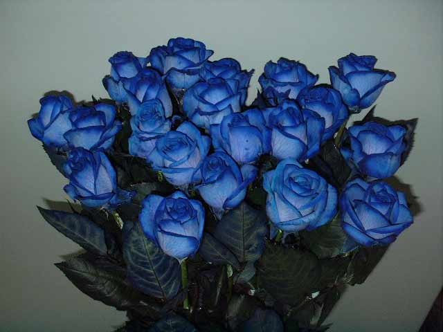 blueroses (640x480, 26Kb)