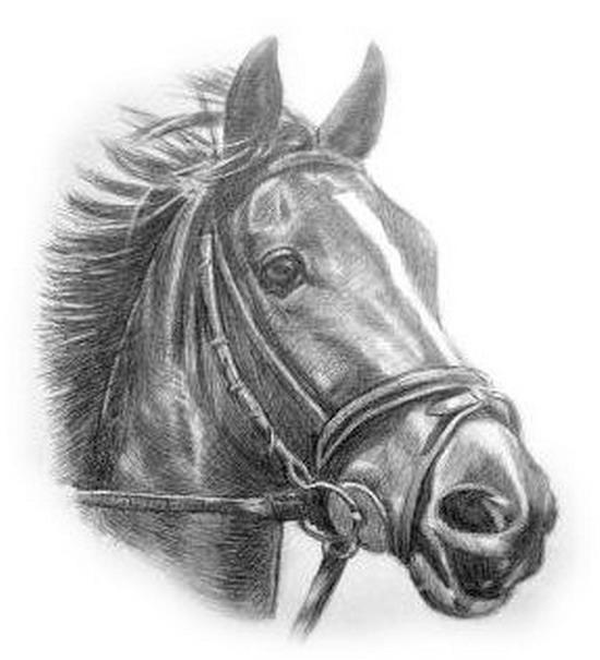 horses-drawings-17 (550x605, 62Kb)