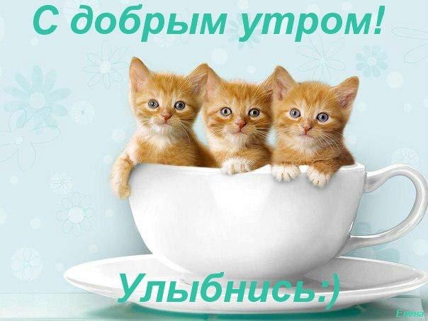 97653743_orig_c7fe74150ce6ffb4bb5563e889