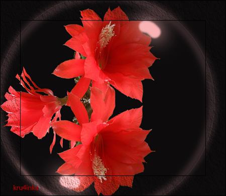 Красный-цветок (450x391, 243Kb)