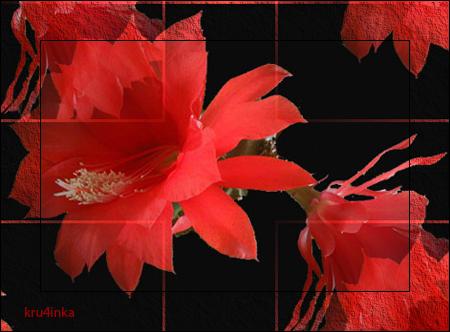 Красные-цветы-на-чнр-2 (450x332, 240Kb)