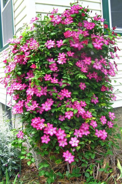 Цветы для сада+схемы цветников